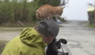 Watch This Kitten Instantly Become the Favorite Intern on a Film Shoot