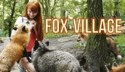 Watch This To Find Out What It Would Be Like to Tour a Fox Village