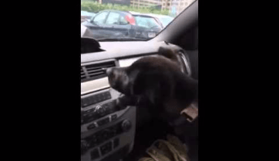 Watch This Puppy Discover Air Conditioning