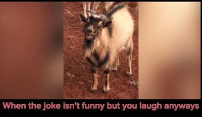 This Goat's Laugh Might Creep You out Because It Sounds Exactly Like a Human