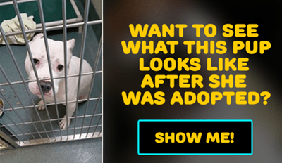 Six Before and After Pictures That Show Why You Should Adopt a Shelter Dog