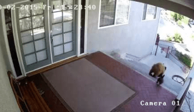 Tiny, Heroic Dog Catches Bears Trying to Start Trouble and Scares Them Away