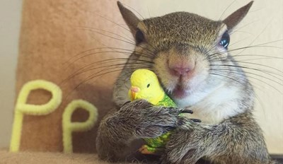 Jill the Squirrel Escaped a Hurricane and Found a Happy Home