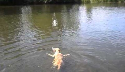 Forget About the Doggy Paddle, the Way This Dog Swims Will Shock You