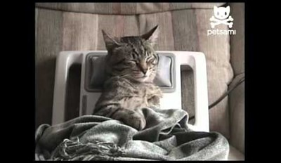 Stressed Cat Is Getting A Relaxing Neck Massage