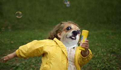 This Excited Corgi Made the Perfect Face for a Photoshop Battle