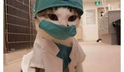 Finally, an HMeOw Doctor