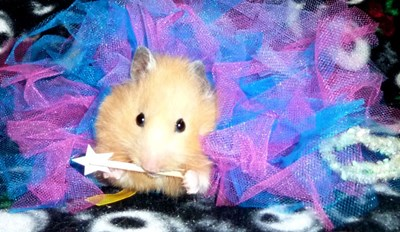 A Hamster Princess