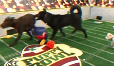 Get Pumped For The Most Adorable Game Puppy Bowl XII Pregame Show