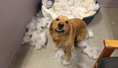 Umm, I Was Just Sitting Here and Then the Bed Exploded...