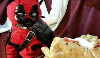 Forget About Deadpool, Catpool Is the Mercenary You Need to Take Care of Your Rodent Problem