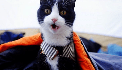 The Camping With Cats Instagram is Purrfect for Adventure Loving Felines
