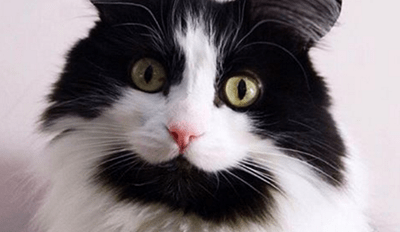 A New App Lets You Imagine Your Pets With Cute Mouse Ears