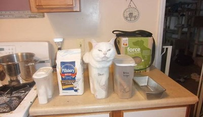 They Said She Could Be Anything, so She Became Flour