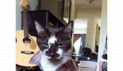 What a Cool Cat!