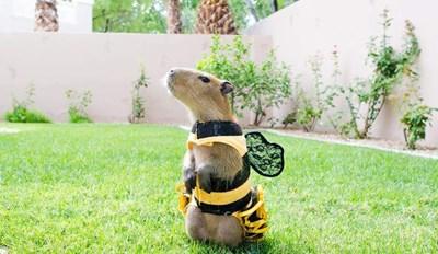 Cap-BEE-bara