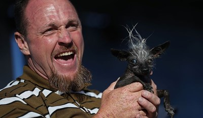 Hades Himself Must've Crafted This Hairy Night Terror That Won the World's Ugliest Dog Competition