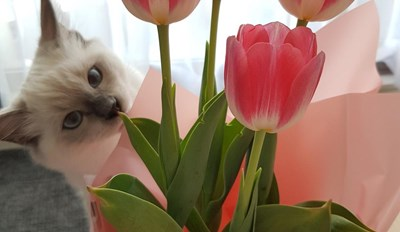 The cutest photobomb...all I wanted to do was to take a photo of my flowers