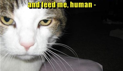 Cat Owners Know This Is Not An Idle Threat