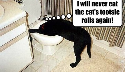 He makes them and leaves them in the litter box!