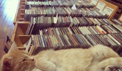 Got Any Cat Stevens?