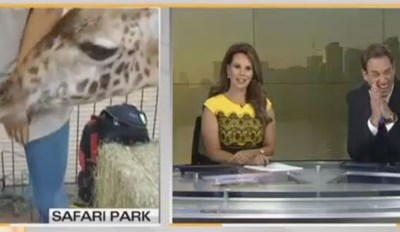 Pushy Giraffe Gets a Little Too Friendly With a Reporter on Live TV and Hilarity Ensues