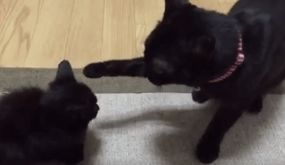 This Might Be the Most Gentle Boop Ever Captured on Video