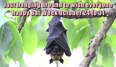 It's Bat Week!