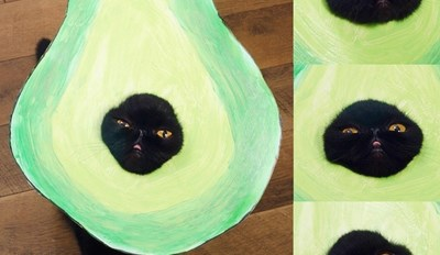 It's an Avocato!