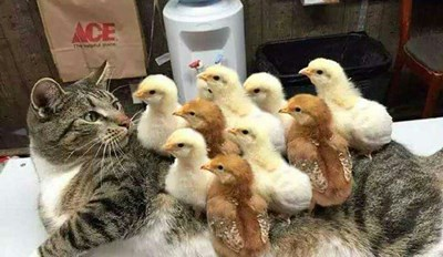 Cat Suffering From a Horrible Case of Chickenpox