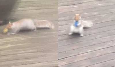 Squirrel Gets Caught Stealing Dozens of Light Bulbs From Someone's Deck