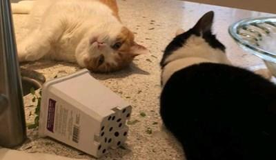 Cats Found the Catnip Plant