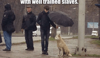 Maybe he was trained by cats?