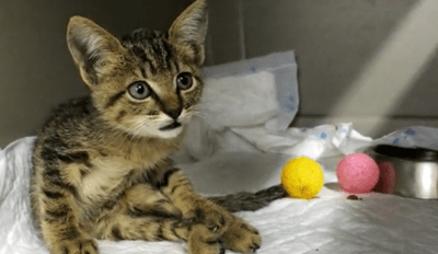 Paralyzed Kitten Is Given a Second Chance Thanks to Some Very Kind People