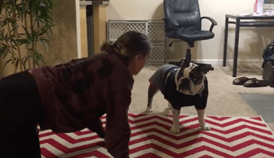 Funny Bulldog Either Loves or Hates Fart Noises, We Can't Tell