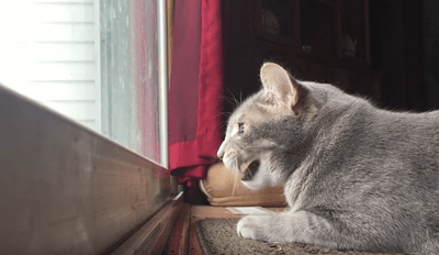 Watch This Thoughtful Kitty Mutter to Himself About the Birds Outside