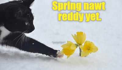 Spring nawt reddy yet