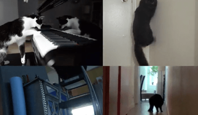 If Cats Made Music, This Is Exactly What It Would Sound Like