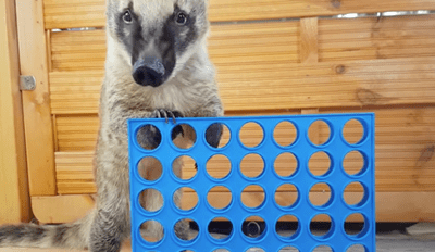 This Clever Animal Knows How to Play Connect Four