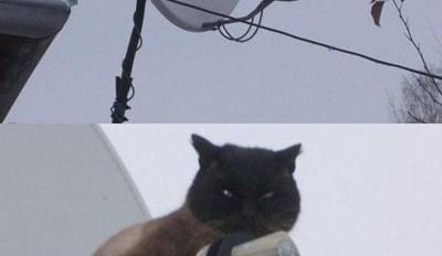 NSA Cat Is Always Watching