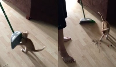 "This Kitten Just Wants To ""Help"" Clean the House"