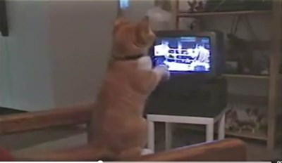 Owner Turns Boxing Match On TV, Then Realizes His Cat Is Mimicking Every Move