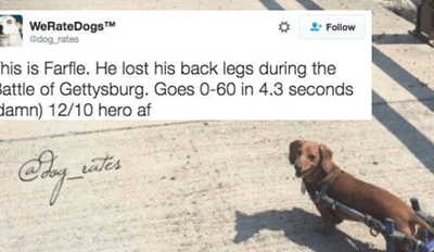 This Twitter Account Will Rate Your Dog With the Most Amazing Review Possible