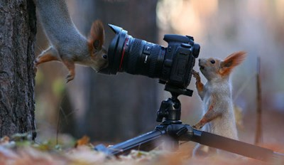 Russian Photographer Captures Surreal Shots of Squirrels in the Wild