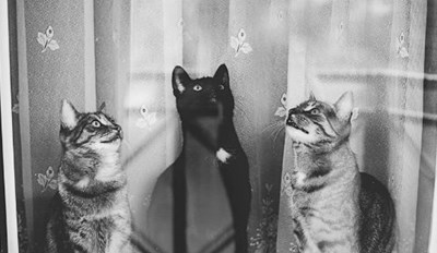 These Black and White Images of Cats Sitting in a Window Purrfectly Capture the Feline Personality