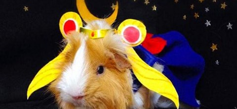 These Guinea Pigs are Better Cosplayers Than You