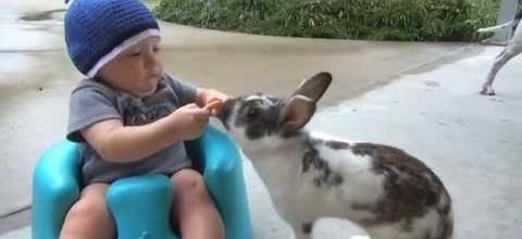 Bunny Steals Baby's Cookie, Baby's Mind is Blown