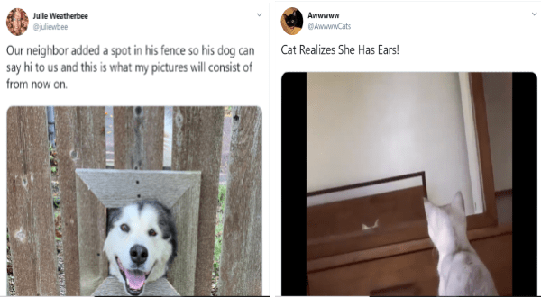 wholesome tweet of a family that put a nice window in their fence so that their dogs could visit each other | White cat learns in the mirror that she has ears