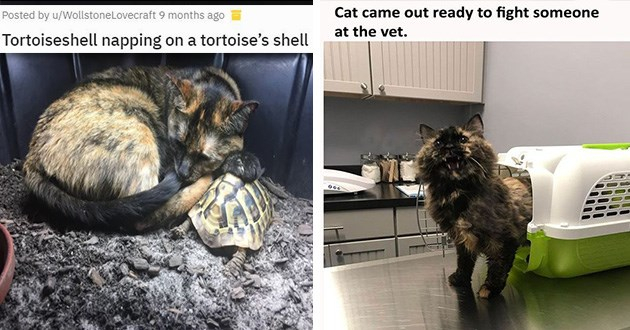 Cat napping on a tortoiseshell and a cute and funny cat that came to the vet ready for a fight
