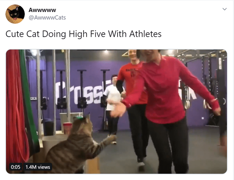 funny animal tweets   Cat doing high fives with athletes heading out to do their thing